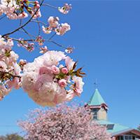 桜とふれあい交流館